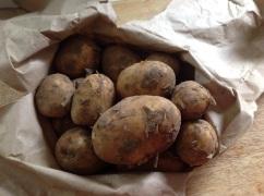 Organic Muddy New Potatoes
